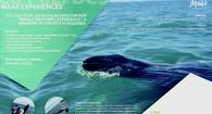15% Discount on Whale Watching