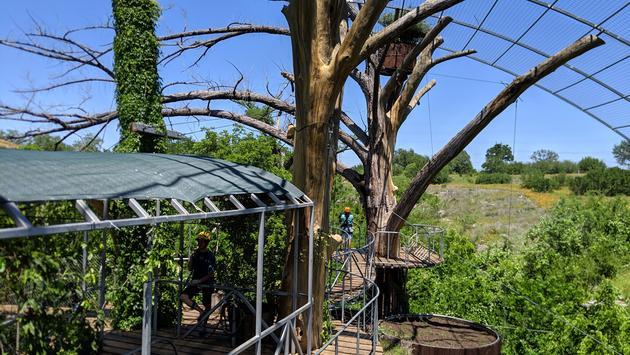 canopy tour, treehouse, austin, ziplines