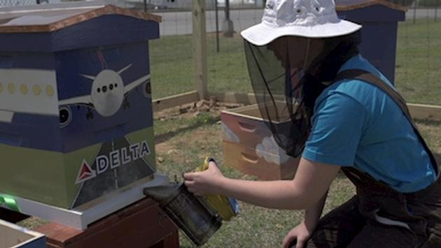 Delta's New Beekeeping Program