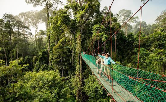 Orangutan Outdoor Forest Center, Malaysia