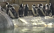 San Diego Zoo Penguin Cam
