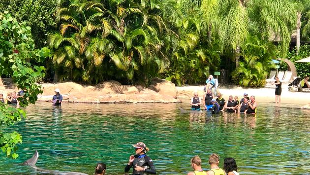 Discovery Cove, dolphin experience, Orlando