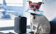 Dog on vacation.