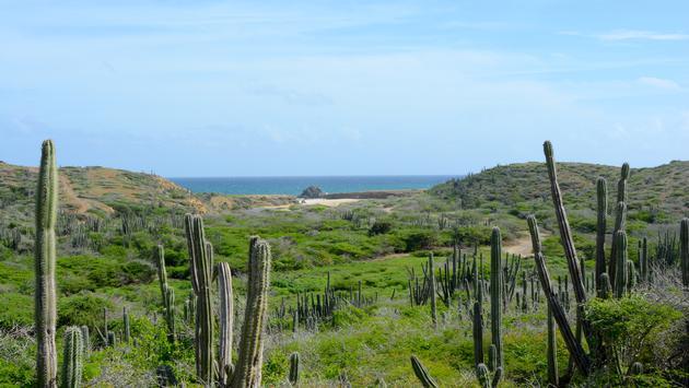 Paysage d'Aruba (photo: Gabriel Anctil)