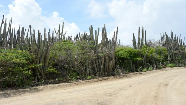 Route à Aruba (photo: Gabriel Anctil)