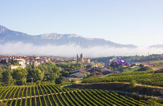 Vineyards in La Rioja, in Northern Spain