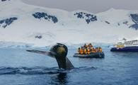 Quark Expeditions wildlife encounter.