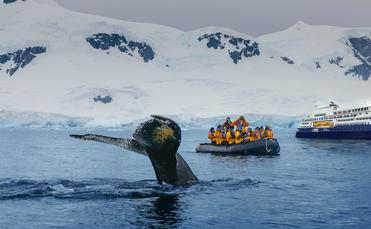 Quark Expeditions wildlife encounter.