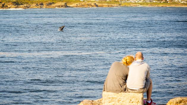 A couple whale watching from Hermanus in Western Cape, South Africa