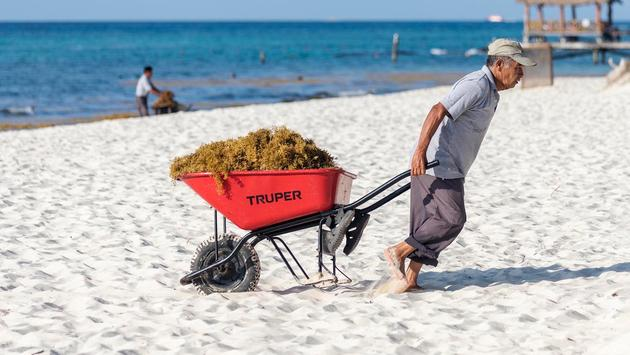 Sargassum Removal in Riviera Maya, Mexico