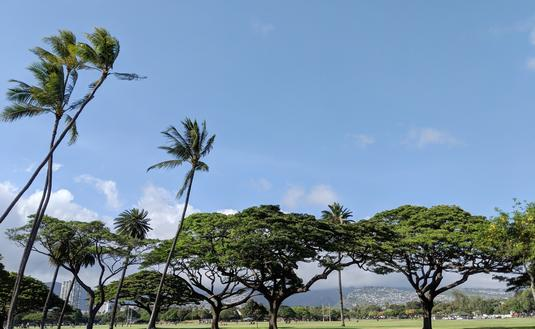 Trees of Kapiolani Park at during day with Honolulu and clouds in the distance on Oahu, Hawaii.