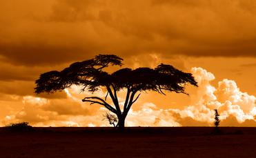 The Kenyan landscape