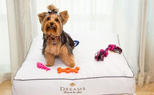 Small Dogs Welcome at Dreams Resorts
