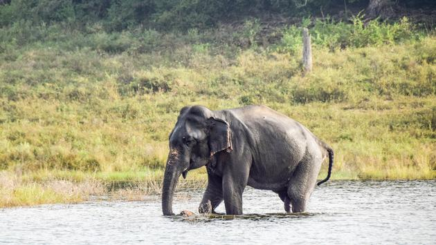 Elephant Safari, Sri Lanka