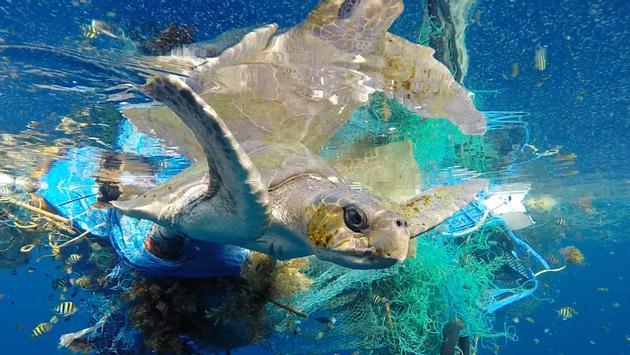 Six Senses Laamu partners with non-profit to save sea turtles