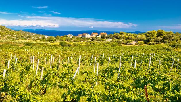 Vineyards on the Island of Vis in Dalmatia, Croatia.