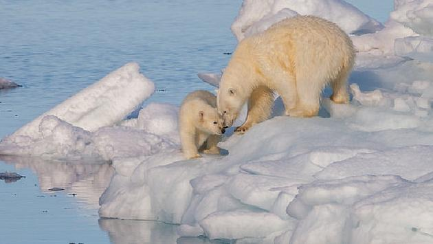A mother and baby polar bear in Norway's Svalbard archipelago.