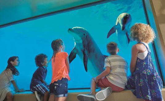 The Mirage Dolphin Habitat