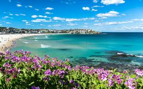 Flowers of Bondi Beach, Sydney Australia