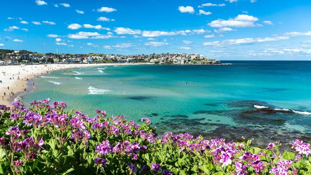 Flowers of Bondi Beach, Sydney Australia