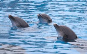 Dolphins in the Water at Marineland, Florida