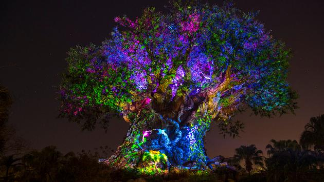 Tree of Life Awakens at Disney's Animal Kingdom at Night