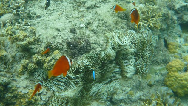 The Great Sea Reef, Nukubati Resort, Fiji