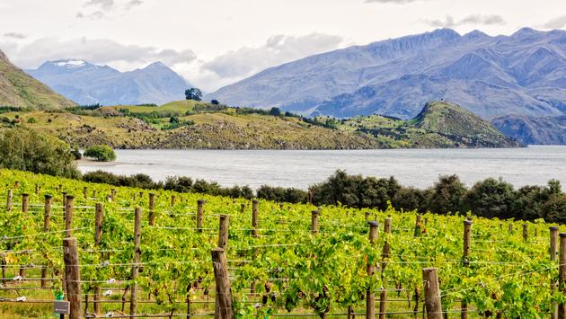 Rippon Vineyard on the shore of Lake Wanaka on the South Island of New Zealand