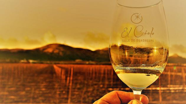 El Cielo wine glass with vineyards in the background