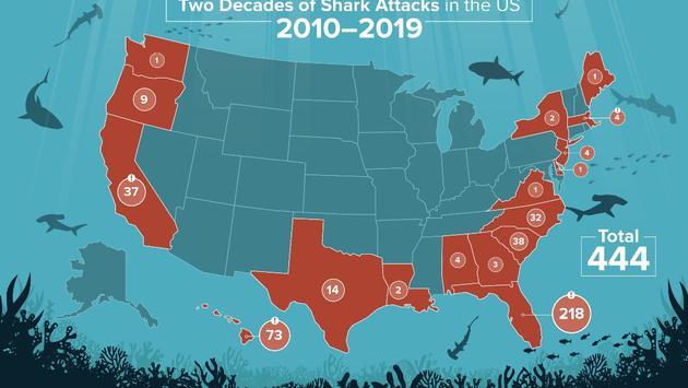 shark, attack, travel