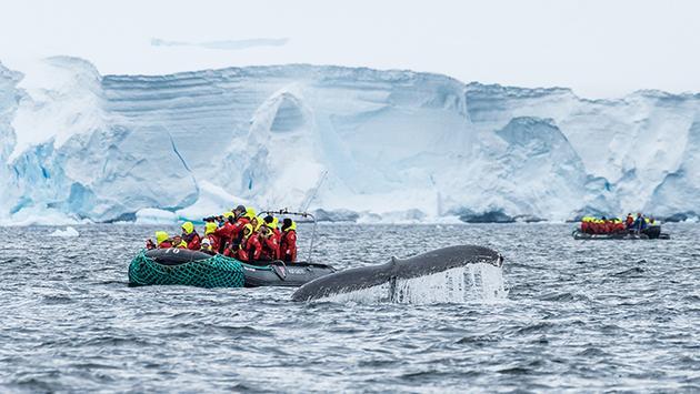 Tenderboat and whale Wilhelmina Bay Antarctica, Hurtigruten
