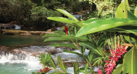 Seven Nights in Jamaica Starting at $480 Per Person!