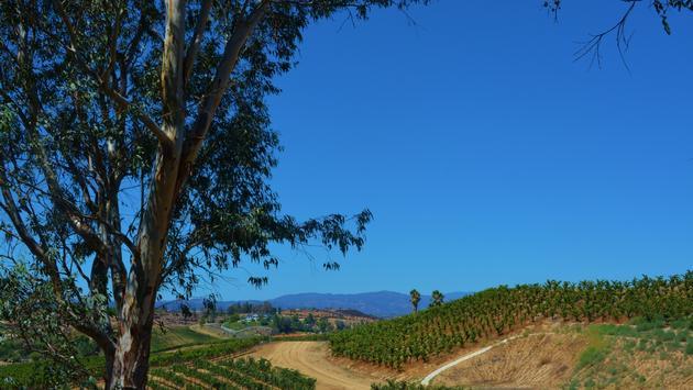 Temecula, California vineyards