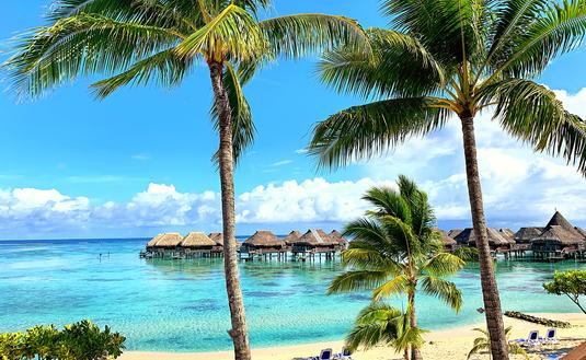 Palm Trees next to turquoise lagoon with overwater bungalows