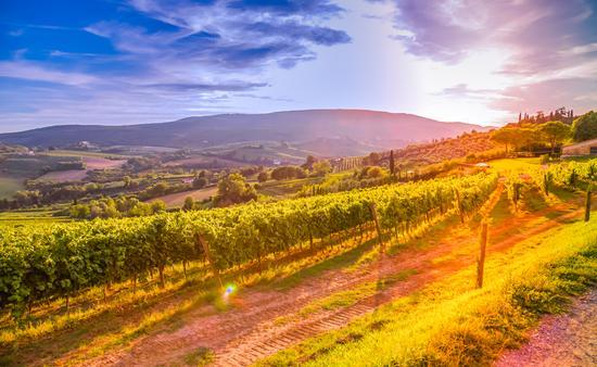 Tuscany, winery, vineyards, wine