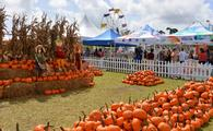Coconut Grove Pumpkin Patch Festival