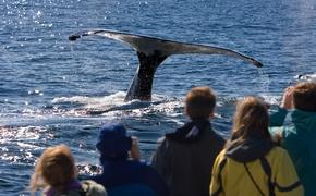 A group of people whale watching