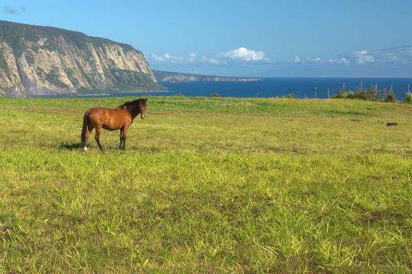 5 Things to Know About the Waipio Valley Shuttle Tour