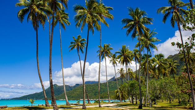Beach with tall coconut palms, turquoise water, overwater bungalows