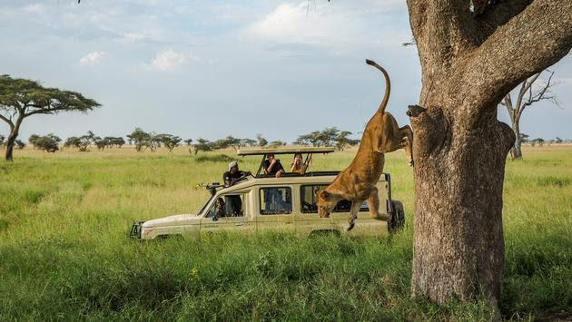 Serengeti Safari, Tanzania