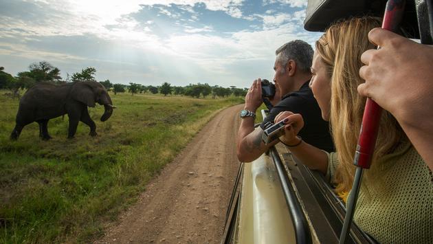 Elephant sighting, Tanzania safari