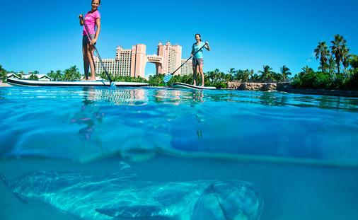 PHOTO: Paddleboard with Dolphins (photo via Atlantis Paradise Island)