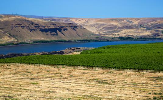 Columbia Valley, Washington, Vineyards