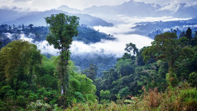 Ecuador Cloudforest, rainforest, trees