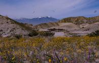Los compañeros de la empresa de viajes Aventuras en el Desierto en un Jeep Rojo  pueden llevar a los turistas a inolvidables paseos.