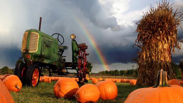 Bengtson Pumpkin Farm
