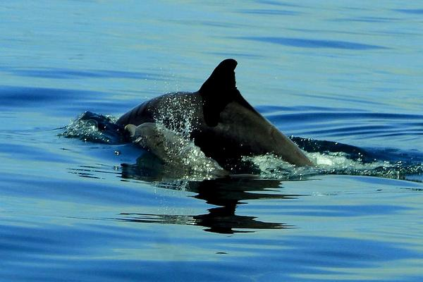 WHAT TO DO IN PANAMA: DOLPHIN WATCHING