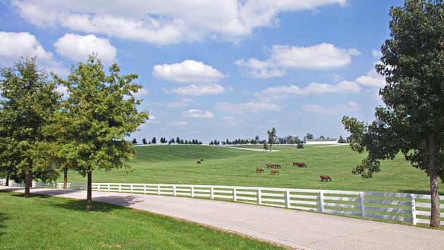 Country Road Through Green Pastures, Lexington, Kentucky