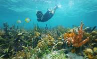 Man snorkeling in the Caribbean Sea off of Bocas del Toro, Panama