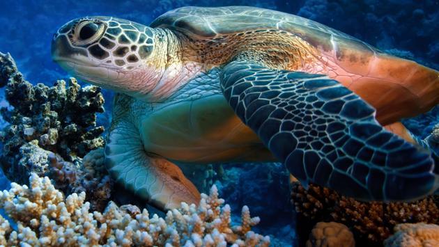 Sea Turtle in Cozumel, Mexico.